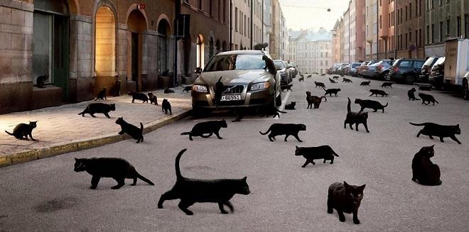 тело появление черной кошки в доме приметы парни всей европы